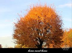 Goldener Oktober