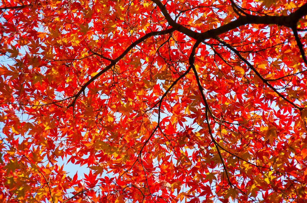紅葉狩り - 東山公園 15