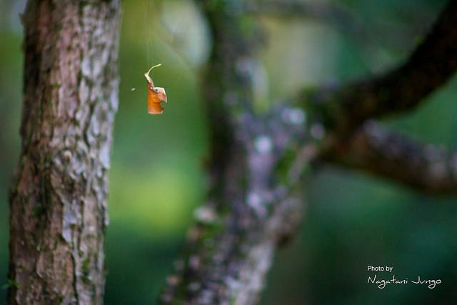 椿谷の紅葉 4