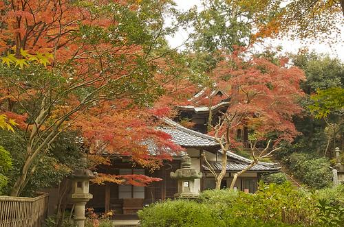 【写真】紅葉 : 来迎院