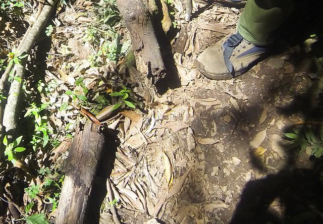 aranha trilha rio do boi