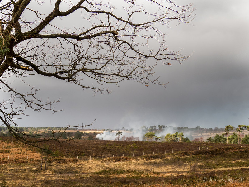 Smoke drifts across Canford Heath
