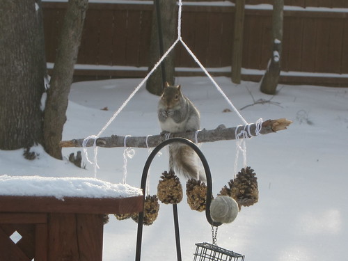 Squirrel visits
