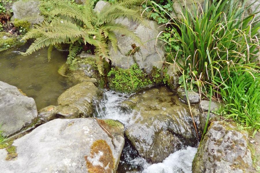 Jardin japonais Albert Kahn (11)