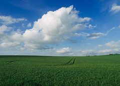 Field, Normandy - Photo of Francheville