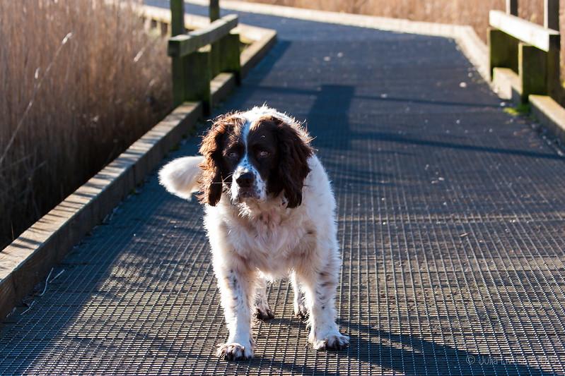 Max on the boardwalk