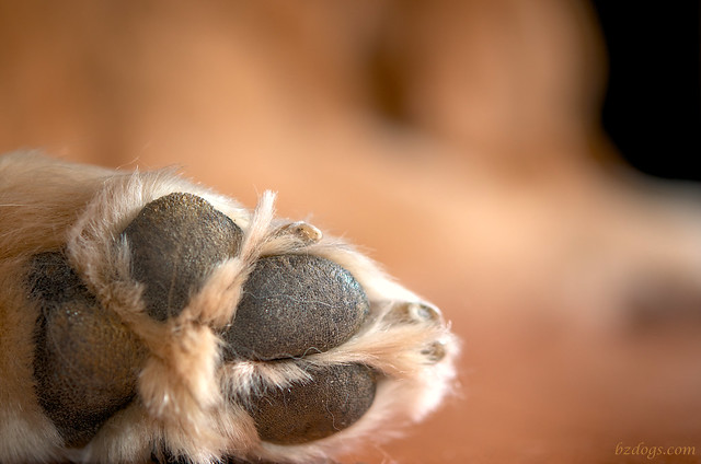 Talk the to Paw