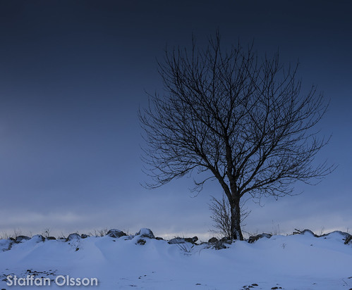 winter light shadow sky snow tree nature canon landscape outdoors sweden wildlife canonef1740mmf4lusm sunrice ef1740mmf40lusm canoneos6d