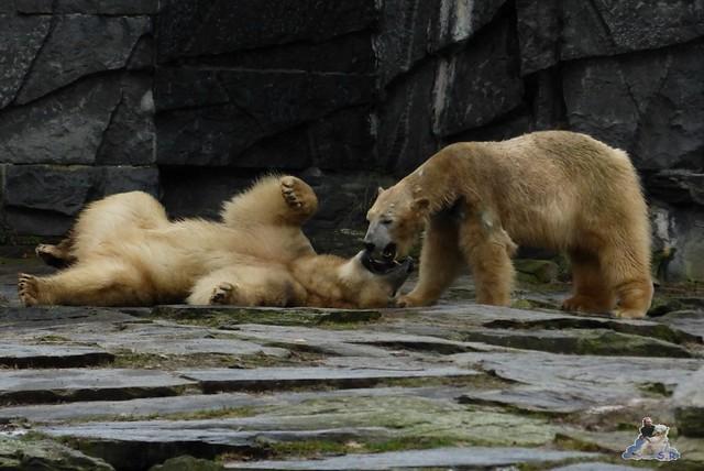 Tierpark Berlin 24.01.2015 46