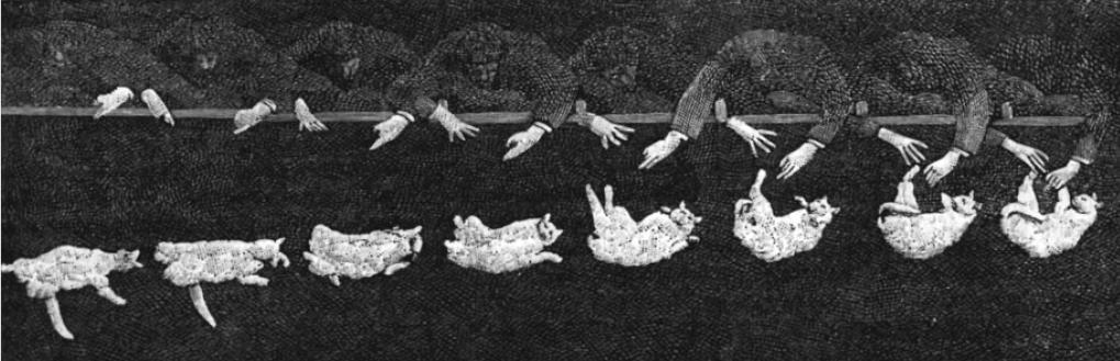 Falling_cat-banner