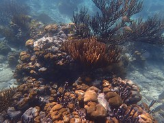 coral reef(1.0), coral(1.0), sea(1.0), ocean(1.0), marine biology(1.0), invertebrate(1.0), tide pool(1.0), marine invertebrates(1.0), natural environment(1.0), underwater(1.0), reef(1.0),