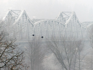 Two birds on the background of misty landscape