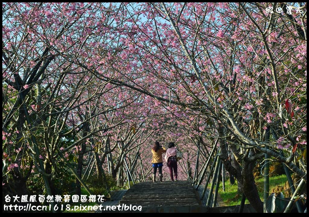 台大鳳凰自然教育園區櫻花DSC_5919