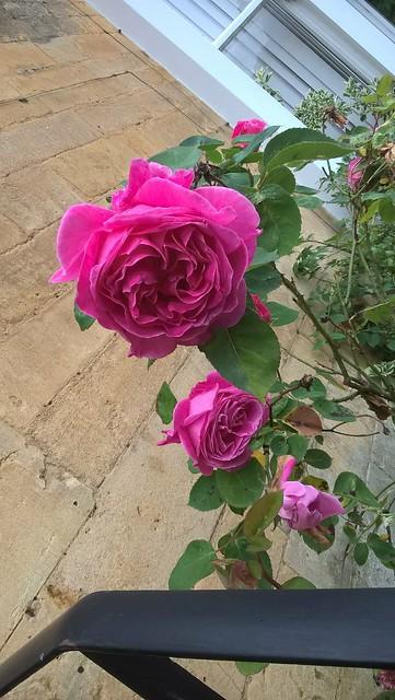 Rose and Railing MiM