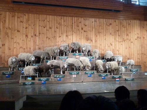 シープショー 羊が勢ぞろい