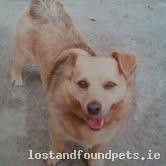Thu, May 2nd, 2013 Lost Male Dog - The Local Area, Urlingford, Kilkenny