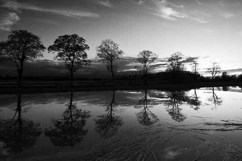 trees sunset sky blackandwhite bw reed nature water monochrome clouds reflections landscape canal sweden dusk tripod nopeople calm scandinavia linköping götakanal sigma1020mm calmwater östergötland ljung ljungsbro gndfilter nordics graduatedneutraldensity sonyalphaslta77