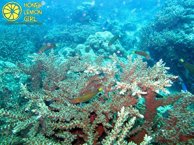 5D4N_Tioman Island_Diving-018