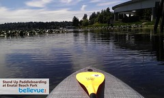 Stand Up Paddleboarding in Bellevue