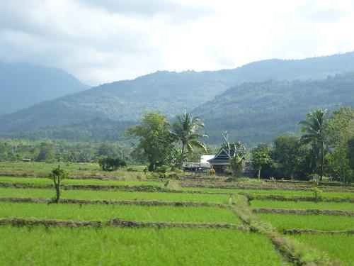 Sulawesi13-Pare Pare-Palopo (52)