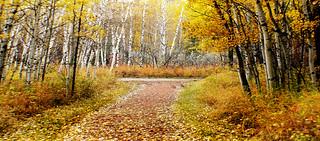 Autumn Calgary Alberta
