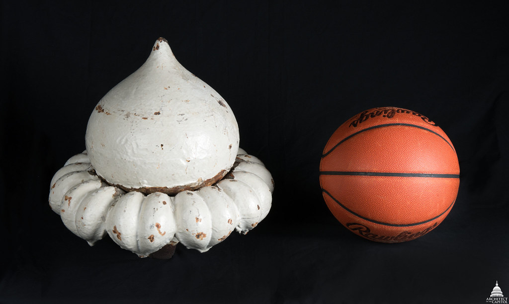 An image that shows the size comparison between an up-facing acorn and a basketball