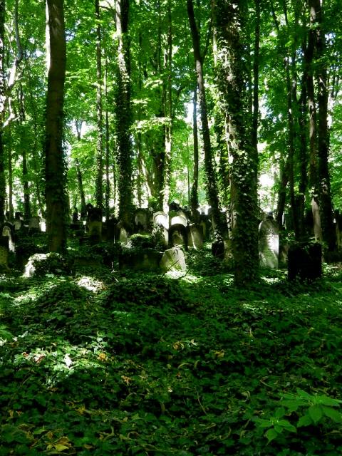 Jüdischer Friedhof Berlin_2013_17