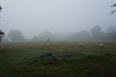 Misty - Photo of Airel