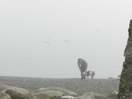 Foggy morning in Bray harbour (August 2012)