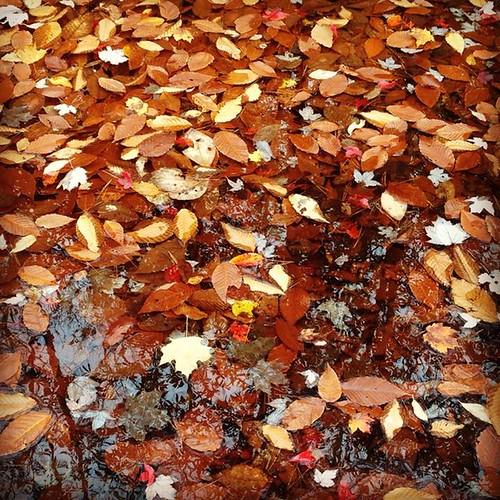 leavesinwater