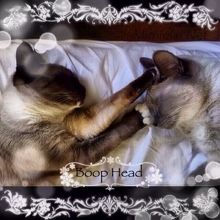 I boop your head!