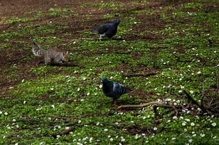 Ecureuil à St Jame's Park