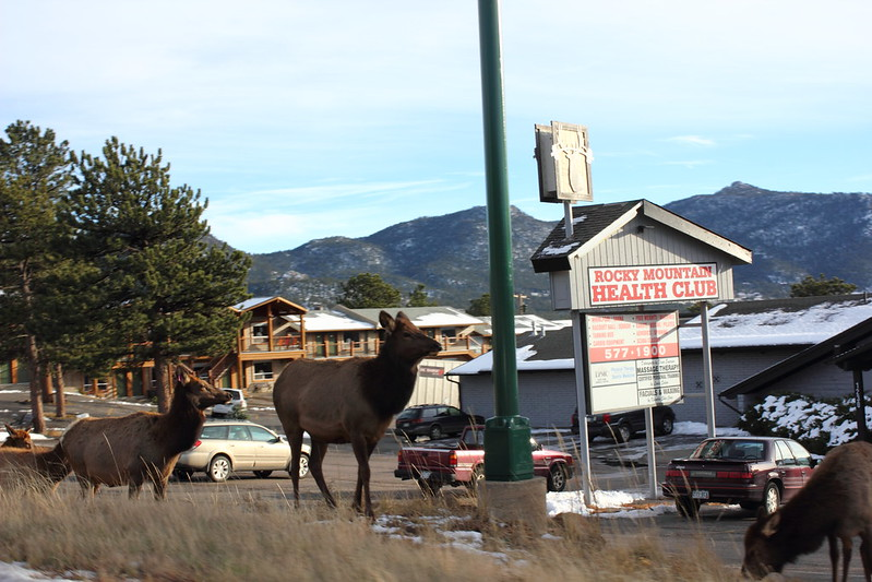 Rocky Mountain Elks