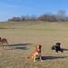 Small photo of Bella, Hank, Nyla, Zeus