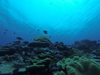 Coral reef. Photo credit: Susan White/USFWS