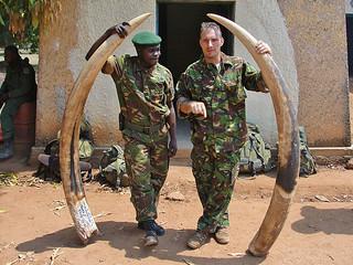 剛果加蘭巴國家公園查獲象牙盜獵,Jonathan Hutson攝影, Enough Project CC授權使用。