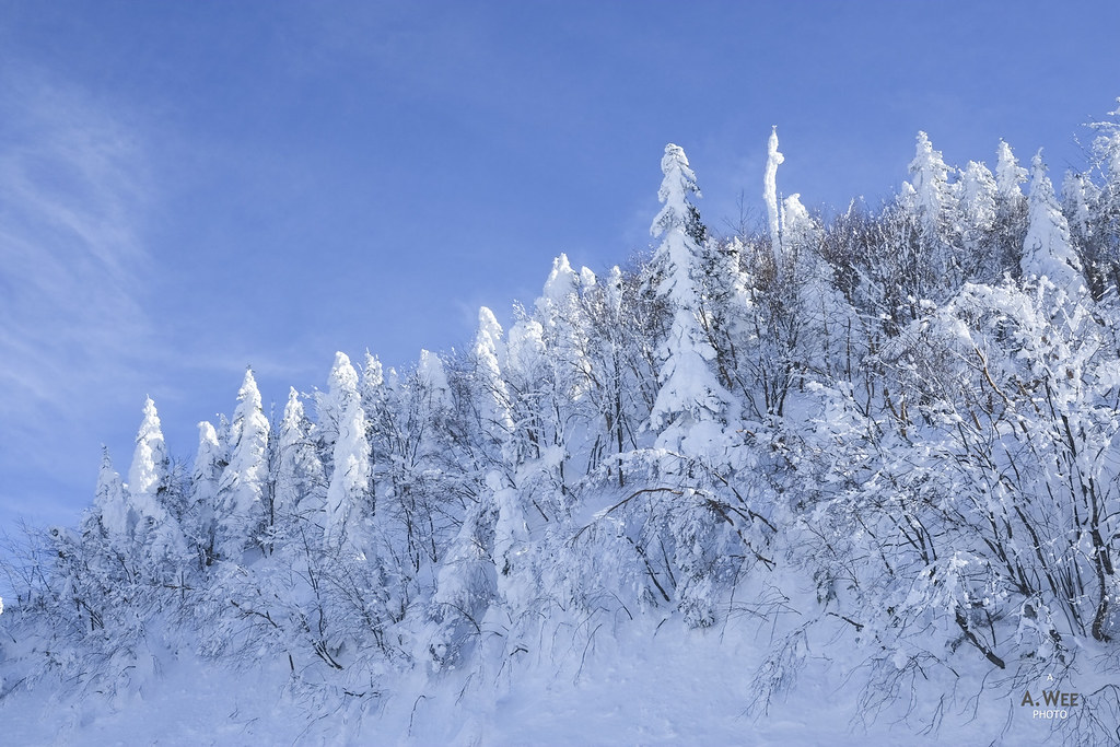 Trees blanketed in snow