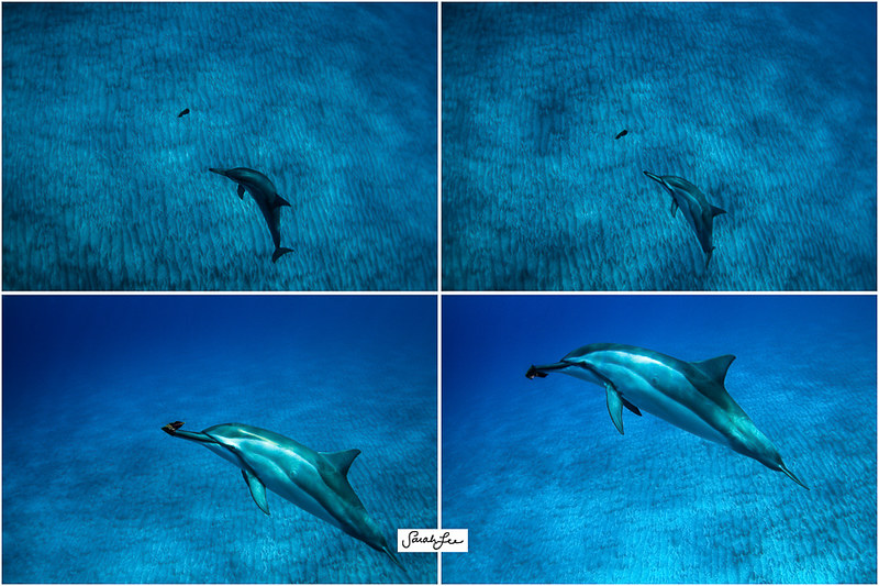 5_wild_spinner_dolphin_leaf_game.jpg