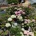 Floricoltura 'San Patrignano' Rimini