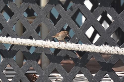 nest material