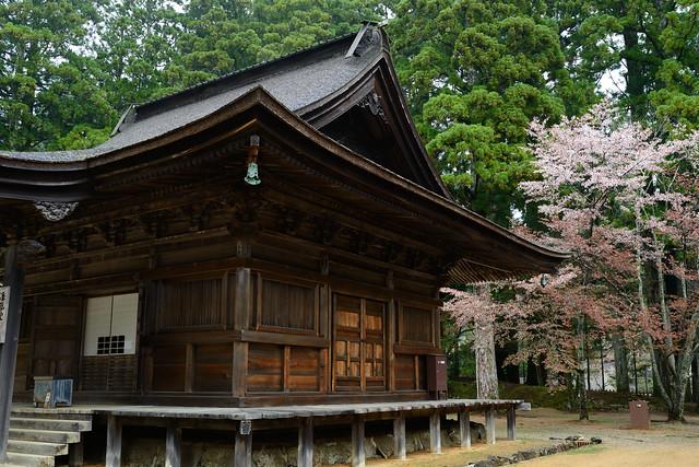 Sakura Remaining