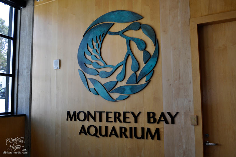 Monterey Bay Aquarium Tickets Related Keywords
