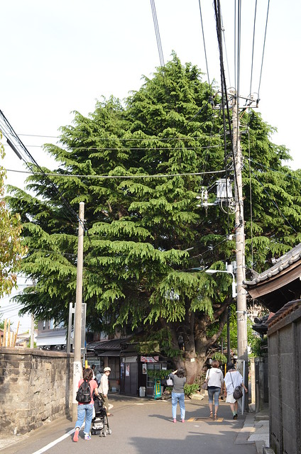 SIGMA 30mm 谷中路地裏散歩 2014年5月3日
