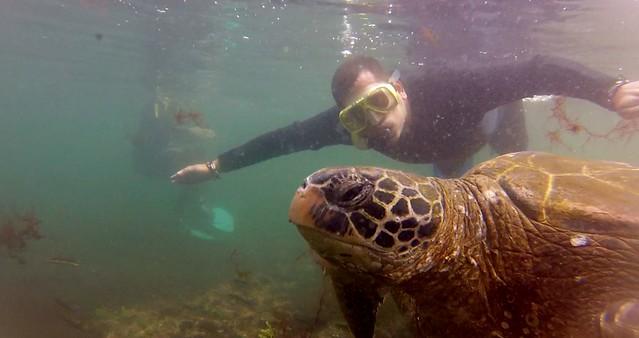 Nadando con una tortuga marina en islas Galápagos