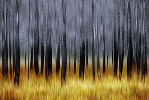 trees scotland torridon