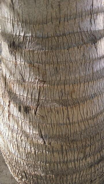 Palm tree III
