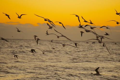 ocean sunrise dawn surf florida indialantic