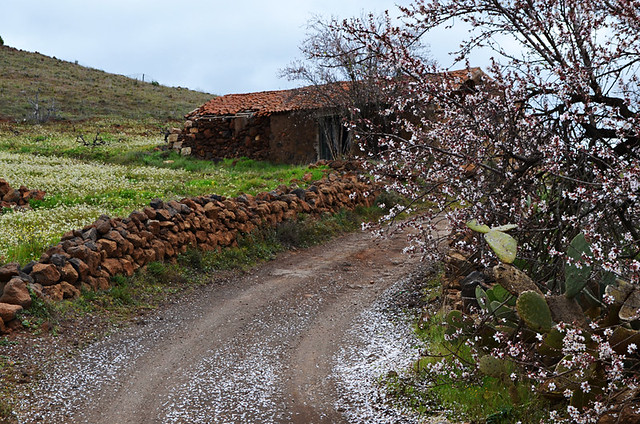 Passing the almond tree