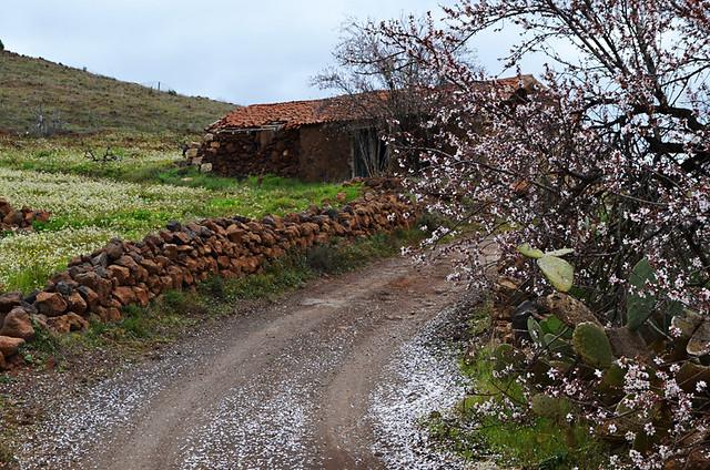 Passing the almond tree