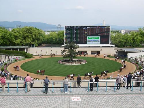 京都競馬場3階から見下ろしたパドック